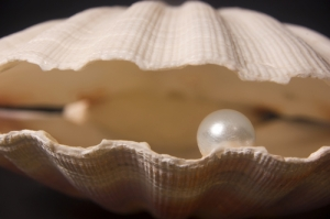 clam-with-pearl