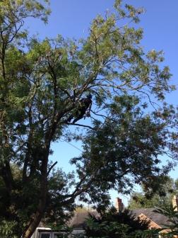 treesurgery2