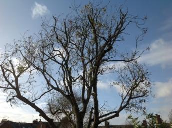 autumn ash tree.jpg