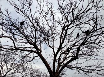 birds-in-trees-full.jpg