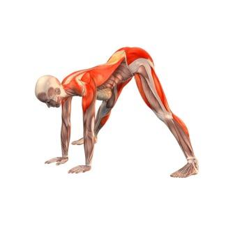 wide-legged-forward-bend