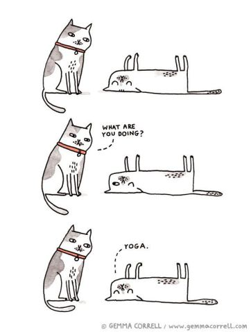 savasana cats.jpg