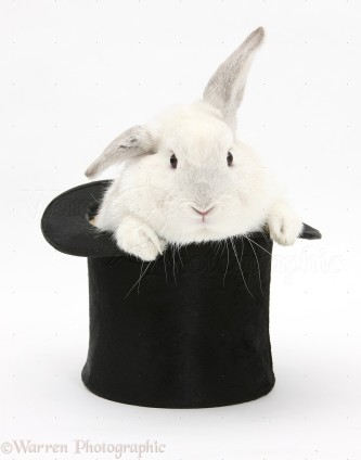 White-rabbit-in-a-top-hat-white-background.jpg
